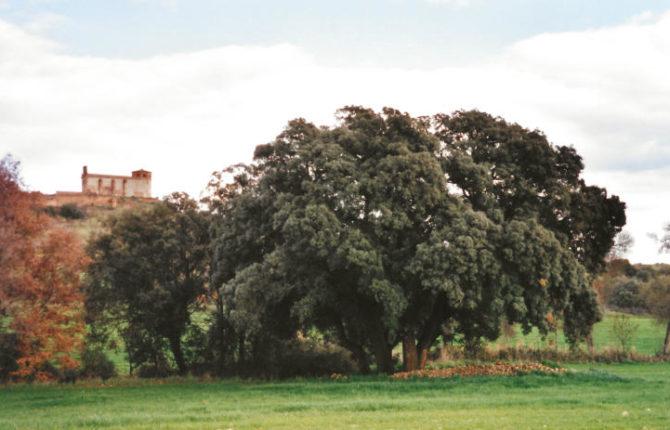 Flora de Guara